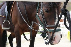 horse-775537_640