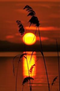 sunset-614667_640